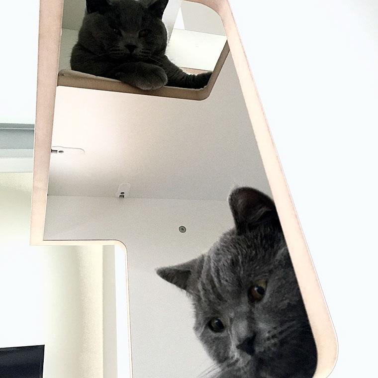 britisch kurzhaar katzen bkh kratzbaum empire bildergalerie stylecats design kratzbaum. Black Bedroom Furniture Sets. Home Design Ideas