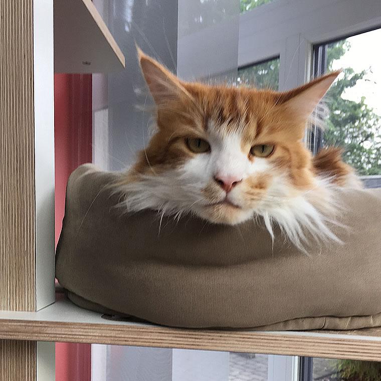 maine coon katze kratzbaum home 2 wei bildergalerie stylecats design kratzbaum. Black Bedroom Furniture Sets. Home Design Ideas