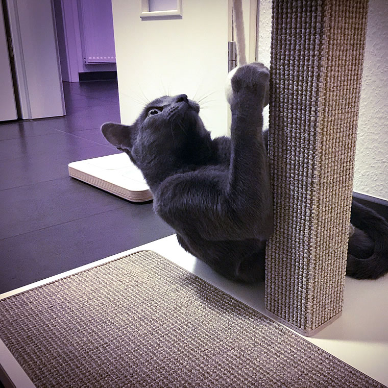 russisch blau kratzbaum home 1 bildergalerie stylecats design kratzbaum. Black Bedroom Furniture Sets. Home Design Ideas