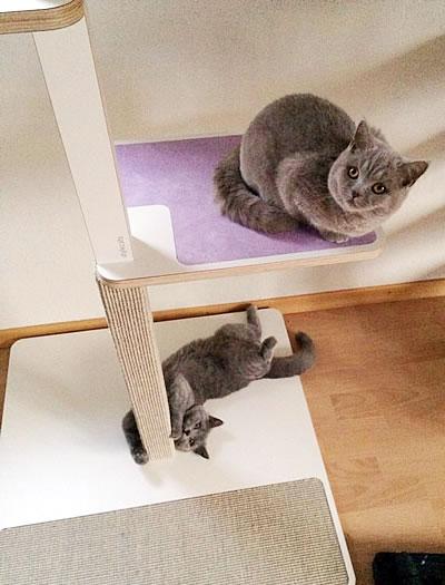 Kratzbaum Home 1-stämmig, 3 Liegeflächen - Kratzbaum Feedback Stylecats