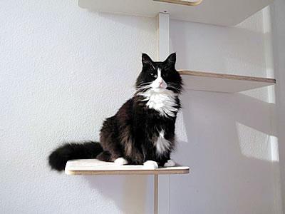 Kratzbaum Leiter 5 Liegeflächen - Kratzbaum Feedback Stylecats