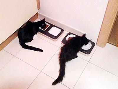 Katzenzubehör Futternapfbar - Kratzbaum Feedback Stylecats