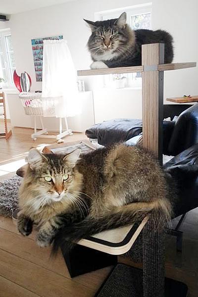 Kratzbaum Home 1-stämmig, 2 Liegeflächen - Kratzbaum Feedback Stylecats