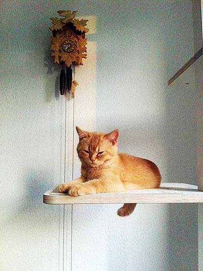 Kratzbaum Home, 4 Liegeflächen - Kratzbaum Feedback Stylecats