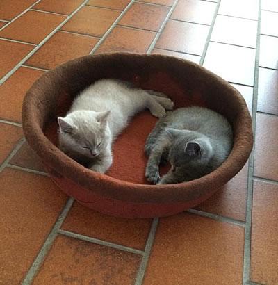 Katzenbettchen Filu - Kratzbaum Feedback Stylecats