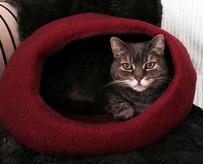 Kuschelhöhle Homy, medium, colour - Kratzbaum Feedback Stylecats