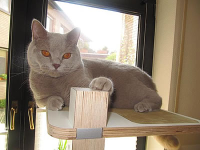 Kratzbaum Home, 3 Liegeflächen - Kratzbaum Feedback Stylecats
