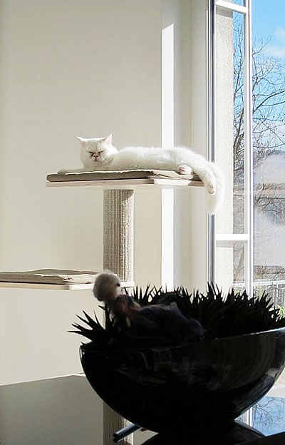 Kratzbaum Coosi, Sisal, 3 Liegeflächen - Kratzbaum Feedback Stylecats
