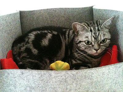 Katzenbett Groovie - Kratzbaum Feedback Stylecats