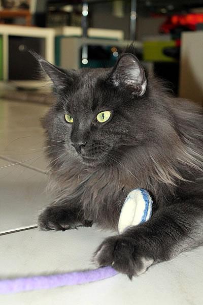 Katzenspielzeug Filzring - Kratzbaum Feedback Stylecats