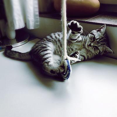 Katzenspielzeug Catch Me - 1 Filzring mit Filzschnur - Kratzbaum Feedback Stylecats