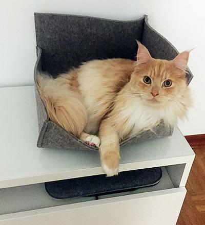 Katzenbett Groovie Medium Hellgrau - Kratzbaum Feedback Stylecats