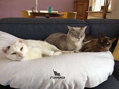 Katzenbett Emie - Kratzbaum Feedback Stylecats