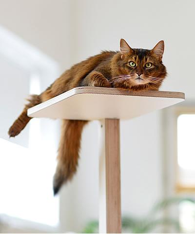 kratzb ume stylecats design kratzbaum. Black Bedroom Furniture Sets. Home Design Ideas
