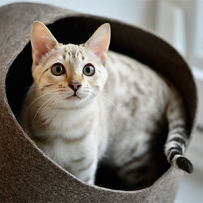 The stylecats designer cat tree - guarantees that you and your cat will enjoy a high-quality cat tree, scratching board or other cat accessories for a long time.