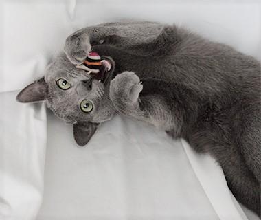 Katzenspielzeug FILZBÄLLE - Ansehen im Kratzbaum Online Shop