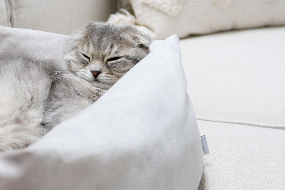 stylecats-katzenrassen-scottishfold